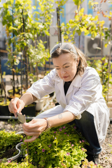 Female agritech scientist inspecting plants