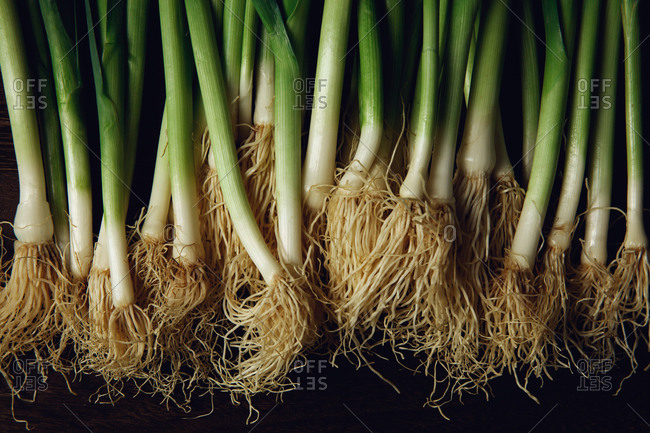Close-up of fresh green onions on dark background