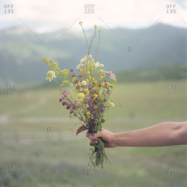 Hand holds a bouquet of freshly picked wild flowers