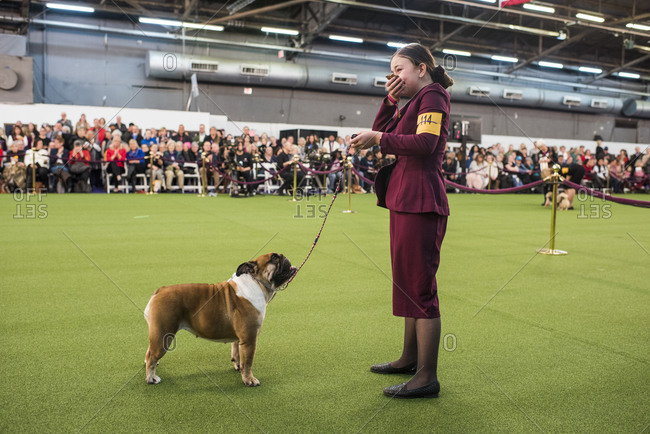 New York City, USA - February 10, 2020: Handler has emotional moment after their win, The 144th Westminster Kennel Club Dog Show, Pier 94, New York City