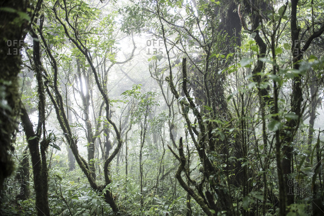 The jungle of the Monteverde Biological Reserve in Costa Rica