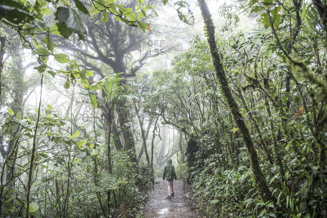 A boy walks a trail in Monteverde Biological Reserve Costa Rica.