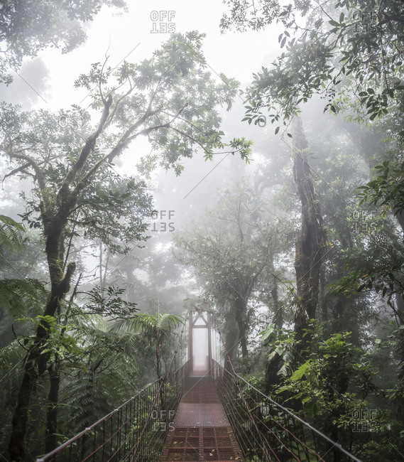 A bridge in the Monteverde Cloud Forest biological reserve Costa Rica
