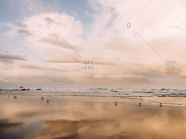 Ocean waves and birds at sunrise on Oregon beach