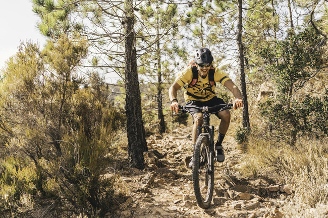 Male on Mountain bike rides between trees in Southern France