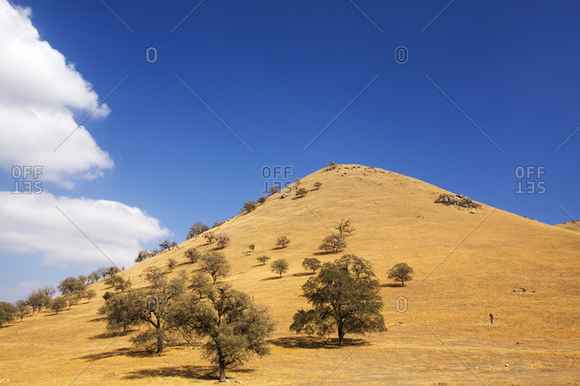 Trees killed by the four year long Californian drought and parched farmland at Tehachapi Pass, California, USA.