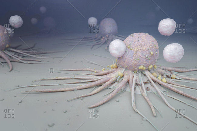 Immune system attacking cancer cells, illustration.
