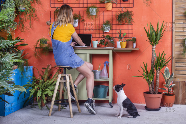 Woman with dog using laptop on her terrace