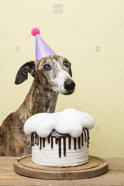 Dog with his birthday cake celebrating his anniversary