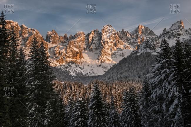 The Pale di San Martino dominate the fir forest of the Venegia valley during a winter sunset, San Martino di Castrozza, dolomites, Trentino Alto Adige, Italy, Europe
