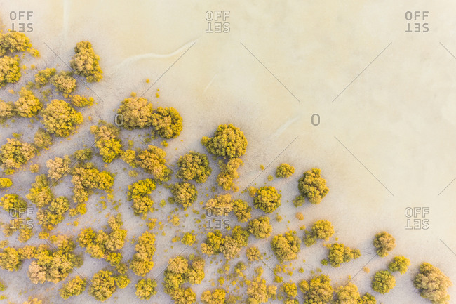 Aerial view of sand with vegetation Abu Dhabi, United Arab Emirates