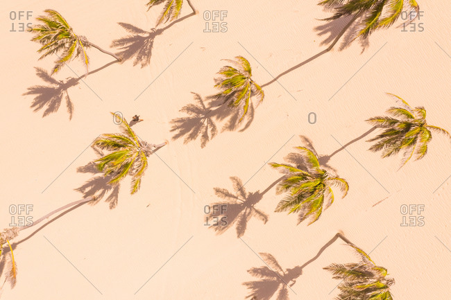 Aerial view of palm trees on the beach, Paracuru, Ceara, Brazil