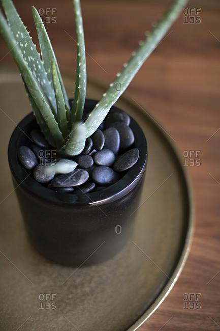 Closeup of succulent on a circular table