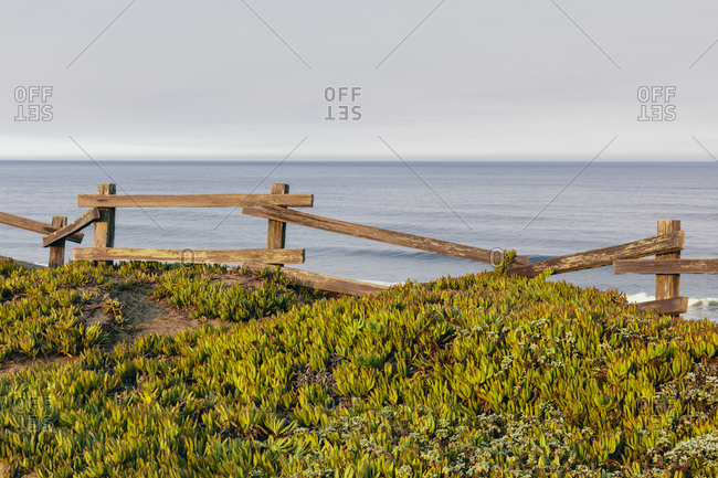 Ice plant ground cover by old wooden fence, ocean in distance