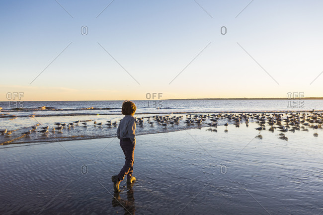 A young boy and a flock of seagulls on a beach
