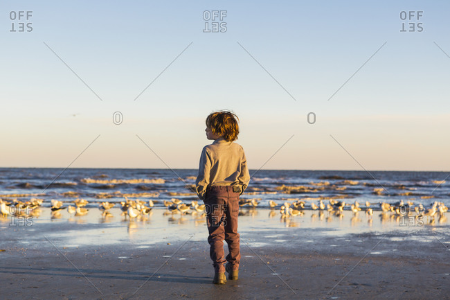 A boy walking on a beach hands in pockets, flock of seagulls on the sand.