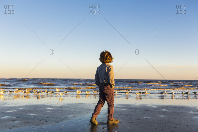 A boy walking on a beach, flock of seagulls on the sand.