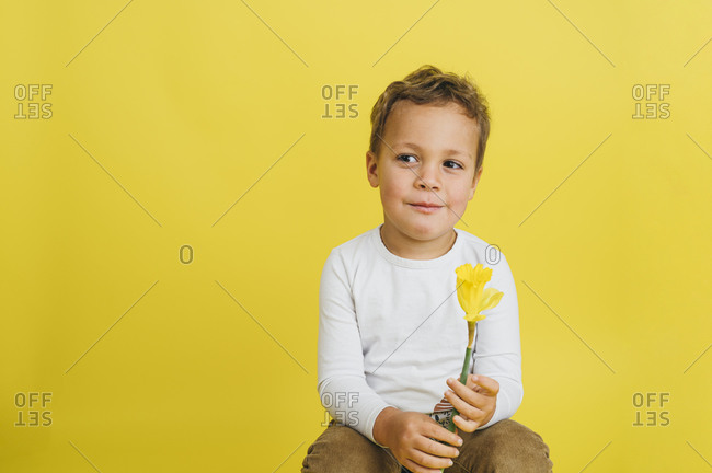 Portrait of a young boy holding a Daffodil on yellow background