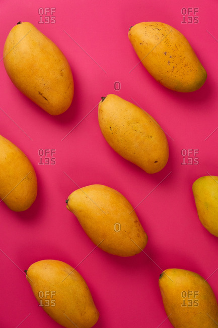 Flat lay mango fruit in pink colorful cardboard background