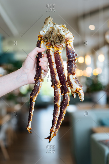 Crop person demonstrating boiled legs of delectable king crab legs in luxury restaurant