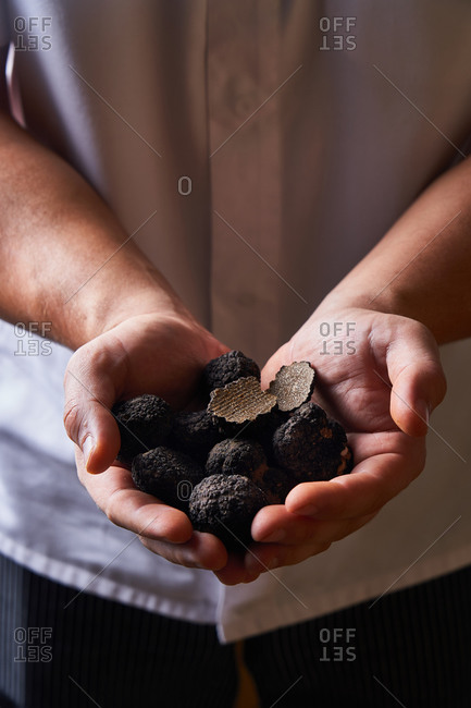 Unrecognizable cook demonstrating handful of black truffles for exquisite dish preparation