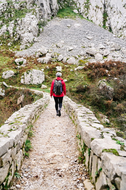 Back view of unrecognizable woman hiker in red jacket with backpack walking in mountain on stone fence path in peaks of Europe, Asturias, Spain