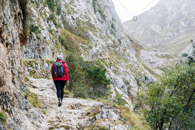 Back view of unrecognizable active woman hiker in red jacket with heavy backpack walking on mountain in peaks of Europe, Asturias, Spain
