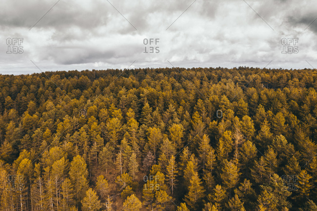 Drone aerial top view of scenic landscape of rural forest trees in countryside