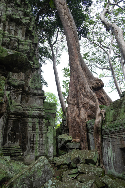 Scenic landscape of destroyed religious Hindu temple and trees of Angkor Wat in Cambodia