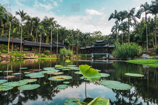 June 26, 2018: June 26, 2018: Pond in park with water lily pads
