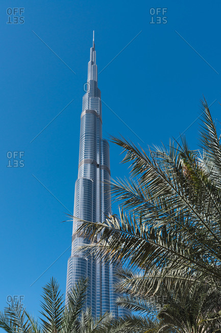 February 26, 2019: February 26, 2019: Leaves of exotic palms near wonderful skyscraper against cloudless blue sky on sunny day on street of Dubai