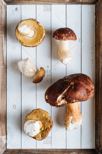 From above tasty fragrant forest mushrooms with brown head on wooden desk in bright day