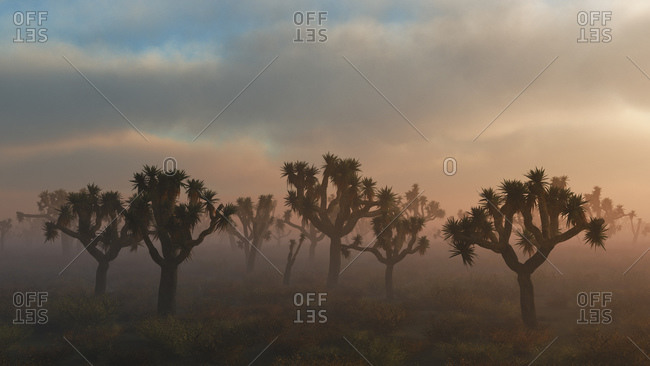 Fog surrounding Joshua trees digitally generated