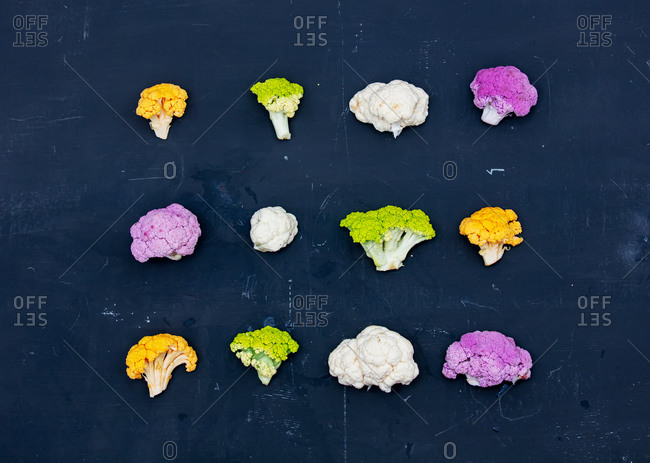 Multicolored cauliflower on a gray background