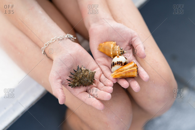 Child's hands holding seashells - Offset