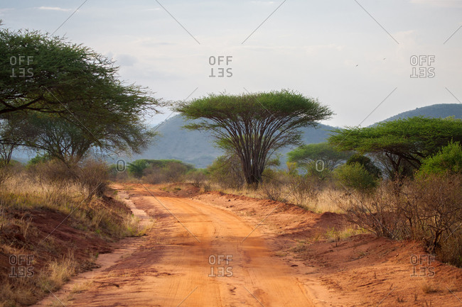 Road in the savannah of Kenya with big trees and mountains, baobab
