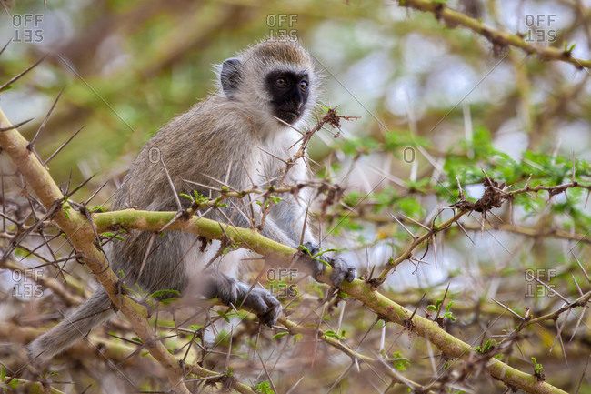 Little monkey on a tree