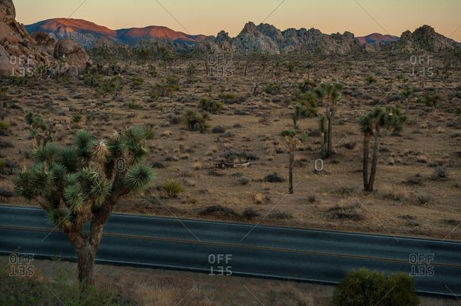 Joshua Tree cacti and road