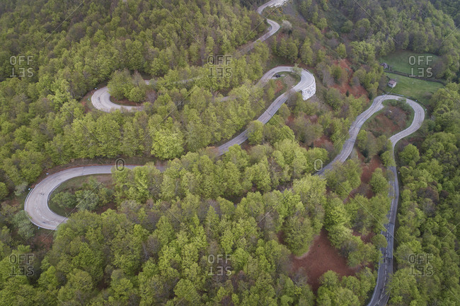 curves in forest from aerial view