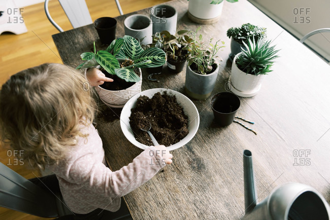Toddler girl helping with re-potting plants and propagation.