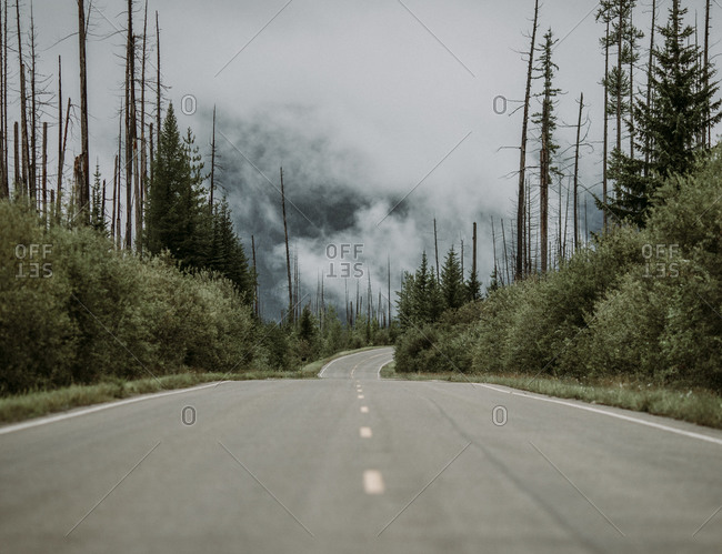 Paved road through a forest recovering from wildfire on cloudy day