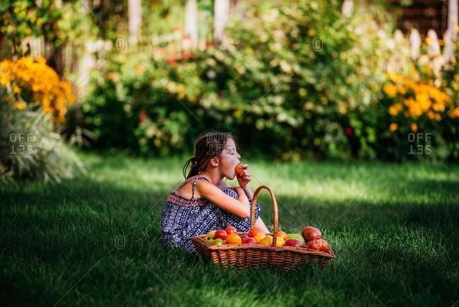 Girl eating a tomato sitting in a garden next to a basket of fresh tomatoes, USA
