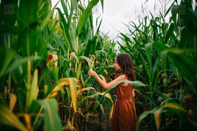 Portrait of a girl in a corn field touching a plant, USA