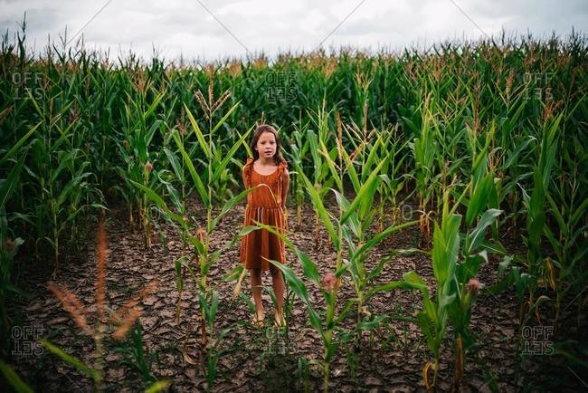 Girl standing in a corn field, USA