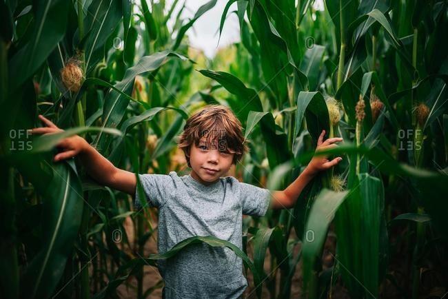 Portrait of a boy standing in a corn field, USA
