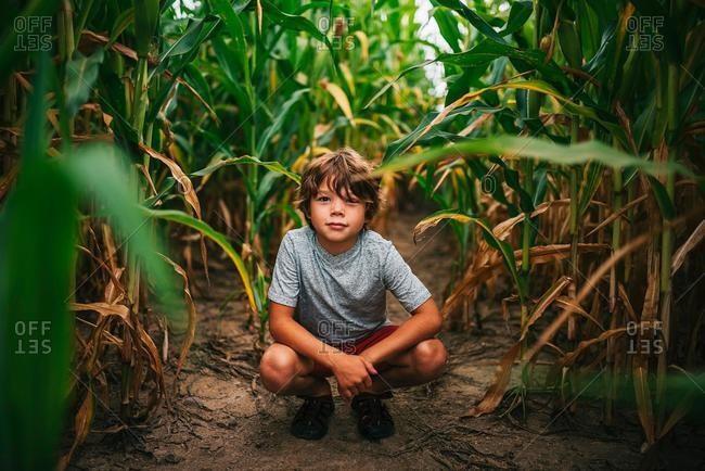 Portrait of a boy crouching in a corn field, USA