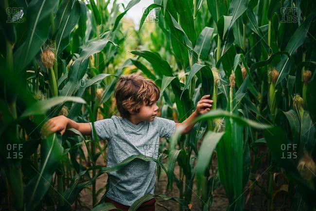 Boy playing in a corn field, USA