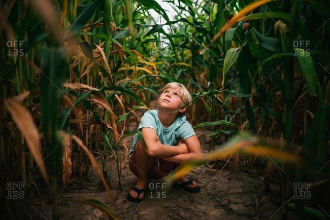 Boy crouching in a corn field, USA