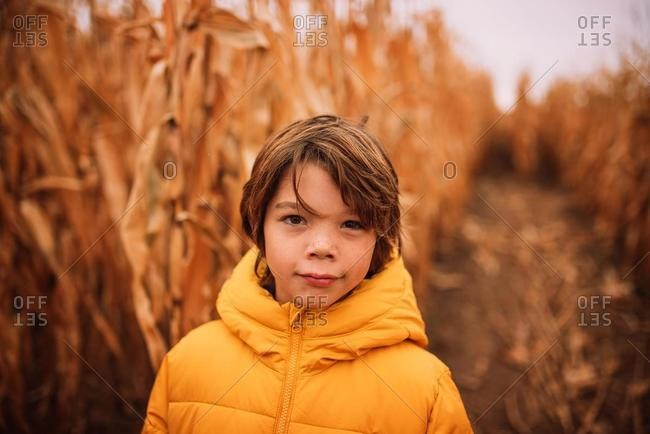 Portrait of a boy standing in a corn field in the fall, USA
