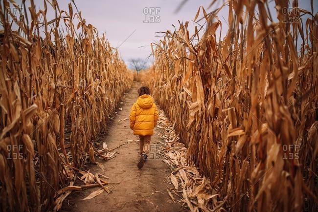 Boy running through a corn field, USA